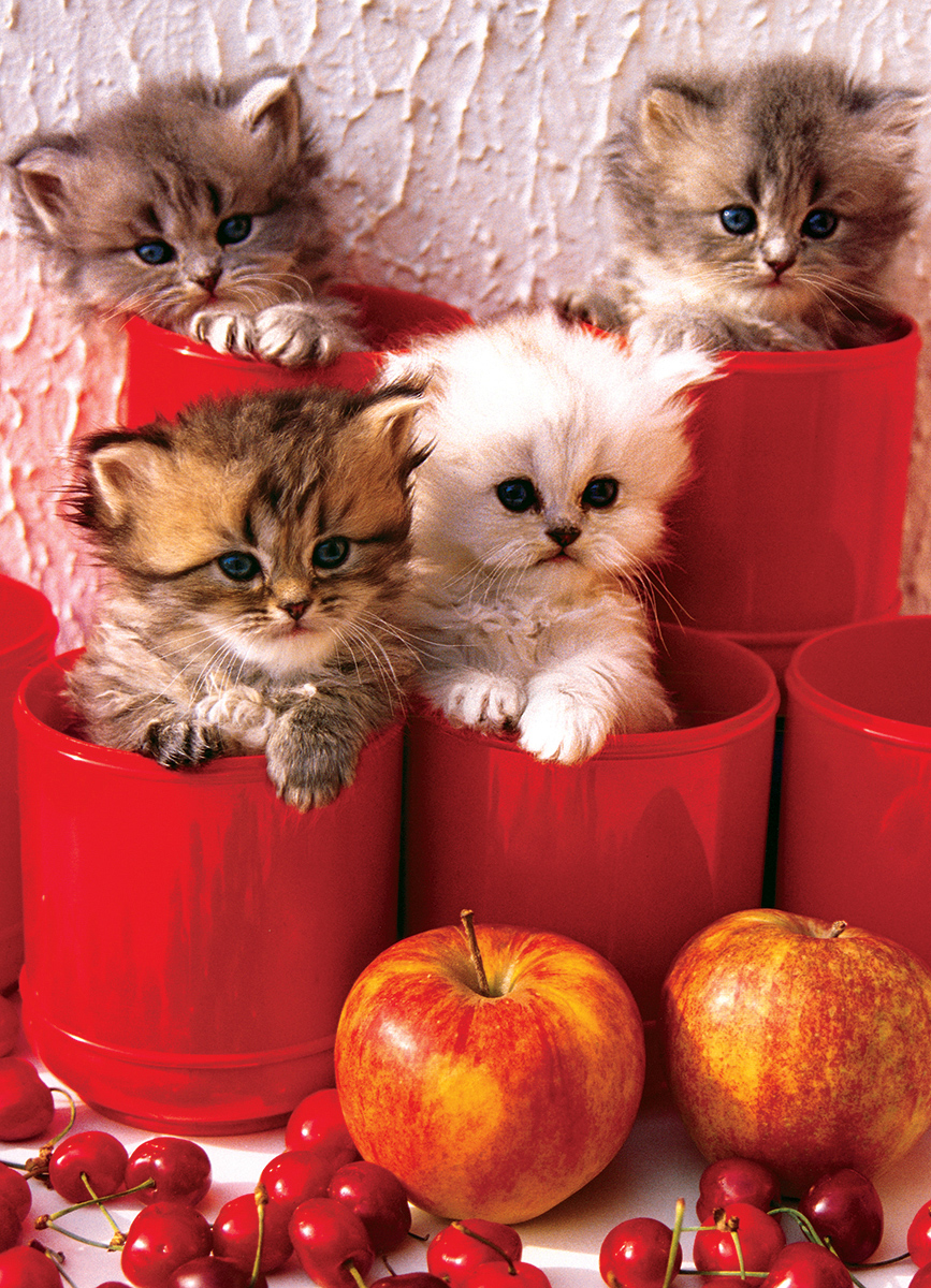 Kittens in Pots Cats Jigsaw Puzzle