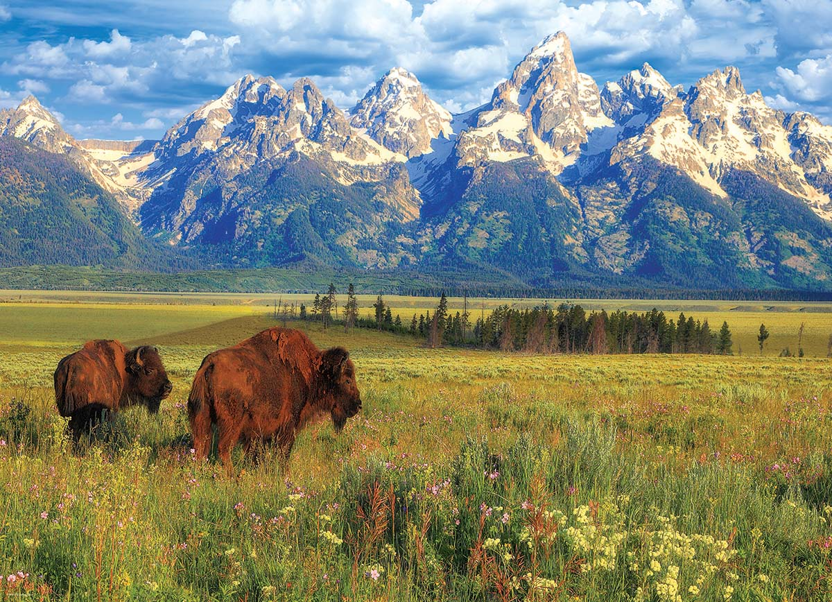 Grand Teton National Park - Scratch and Dent Mountains Jigsaw Puzzle