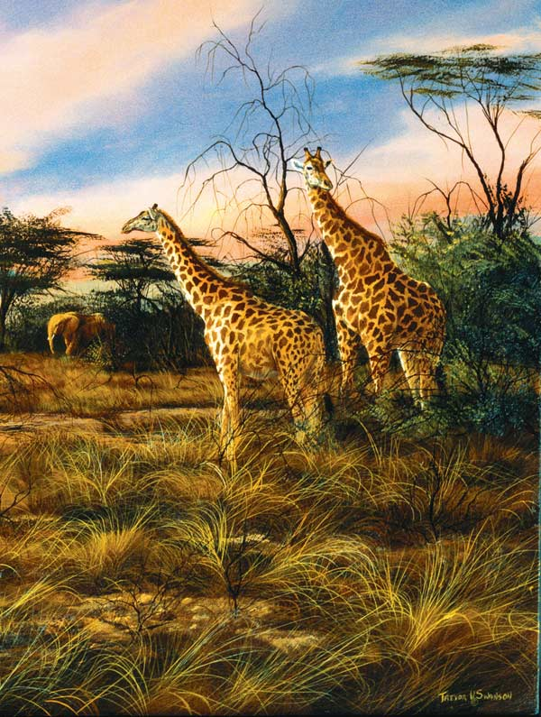 Giraffes at the Watering Hole Africa Jigsaw Puzzle