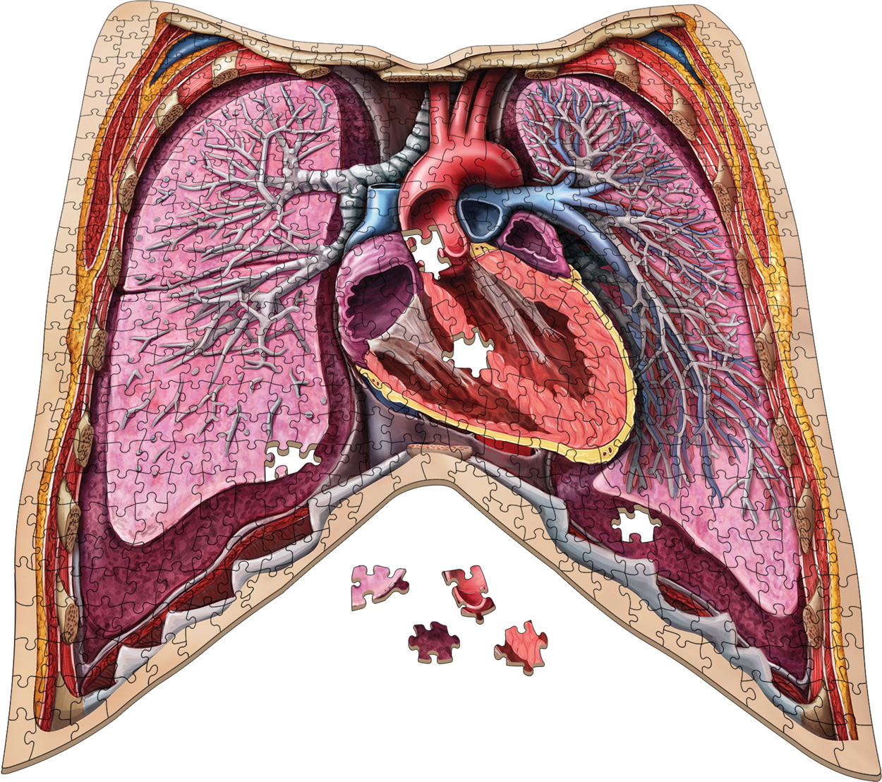 Dr. Livingston's Anatomy Jigsaw Puzzle: The Human Thorax Anatomy & Biology Shaped Puzzle