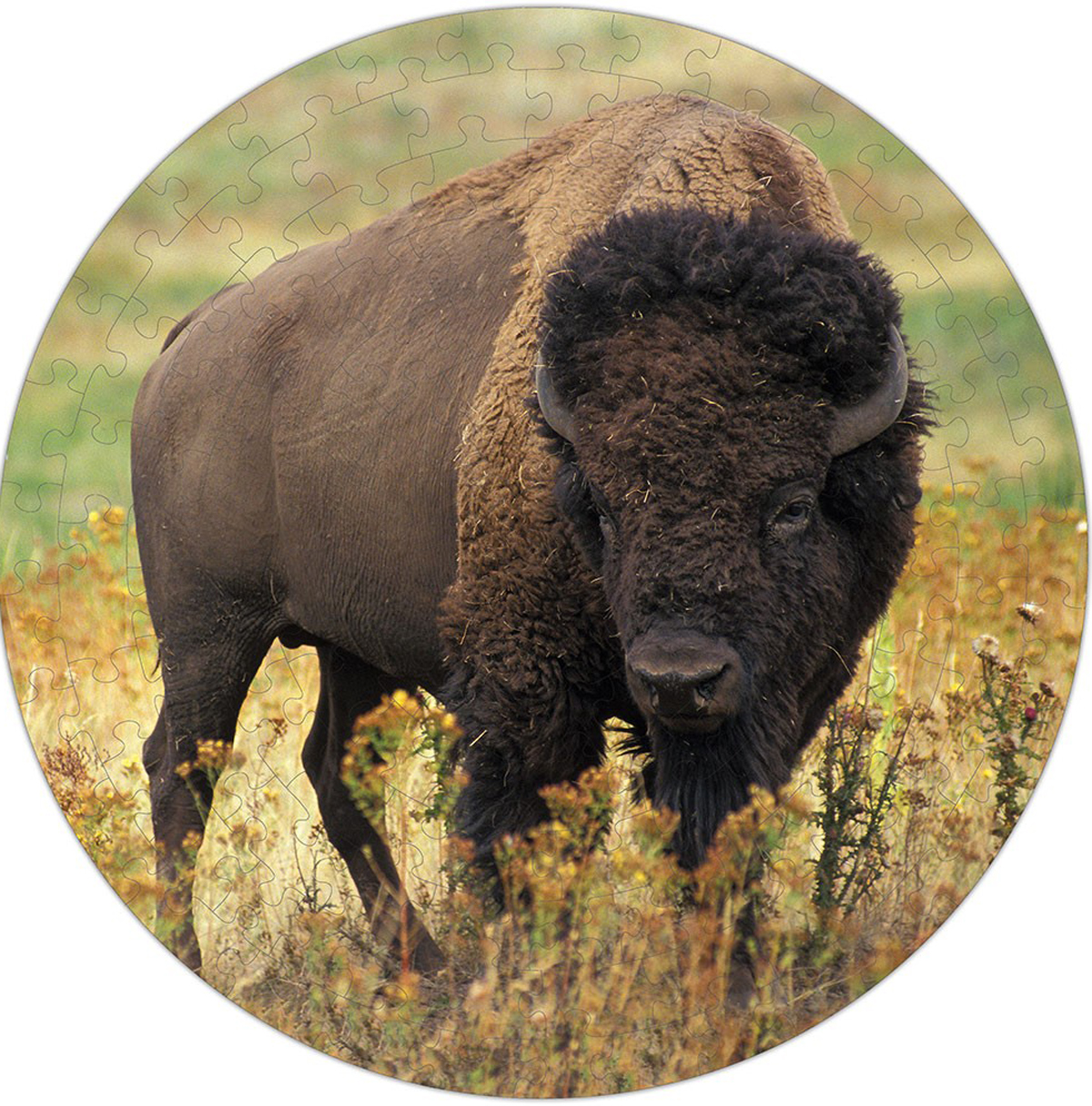 American Bison Puzzle A•Round: Animals Shaped Puzzle