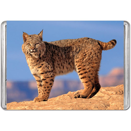 Bobcat (Mini) Animals Jigsaw Puzzle