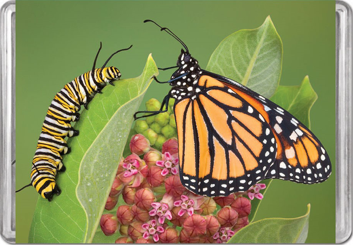 Monarch Butterfly MiniPix® Puzzle Butterflies and Insects Jigsaw Puzzle
