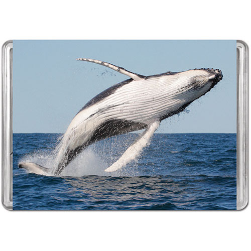 Humpback Whale Animals Jigsaw Puzzle