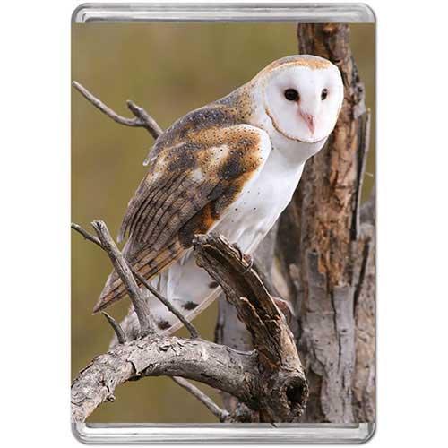 Barn Owl (Mini) Photography Jigsaw Puzzle
