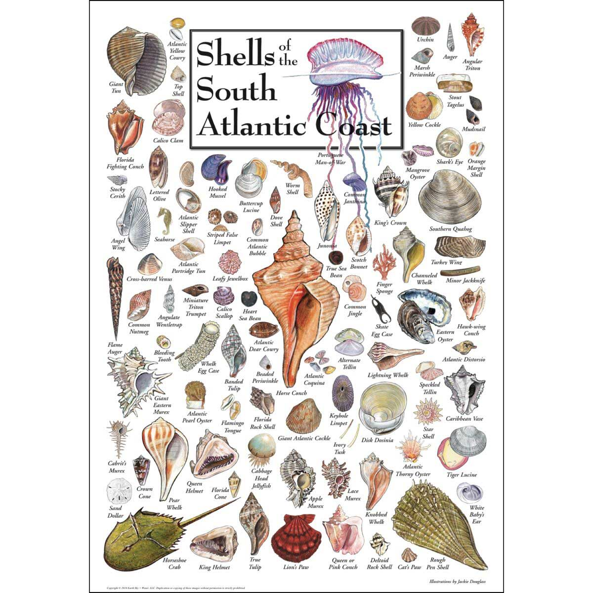 Shells of the South Atlantic Coast Under The Sea Jigsaw Puzzle