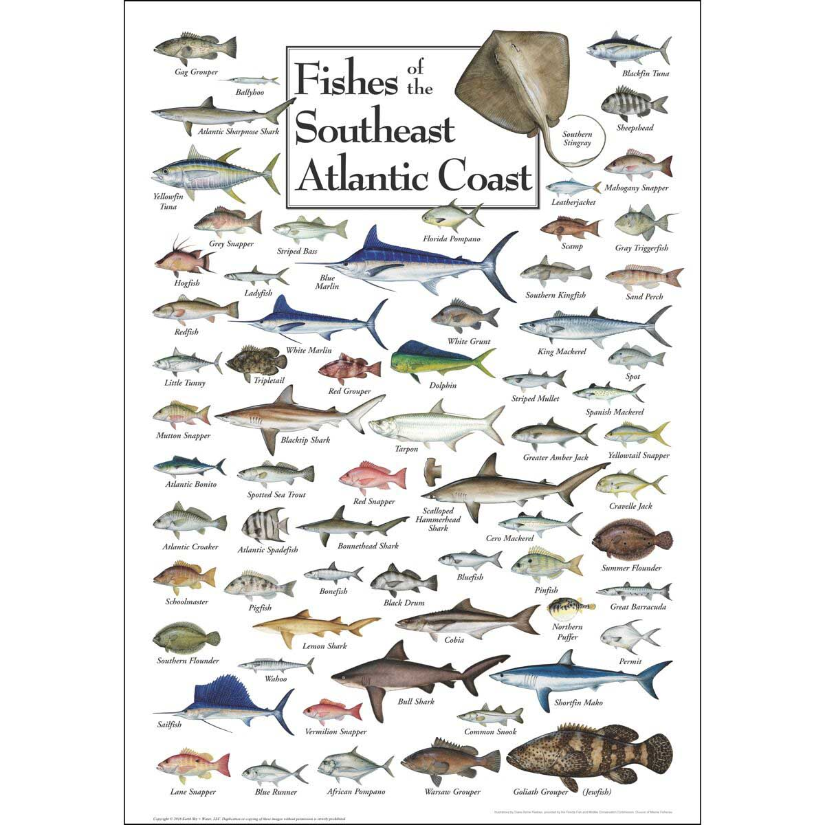Fish of the South Atlantic Coast Fish Jigsaw Puzzle