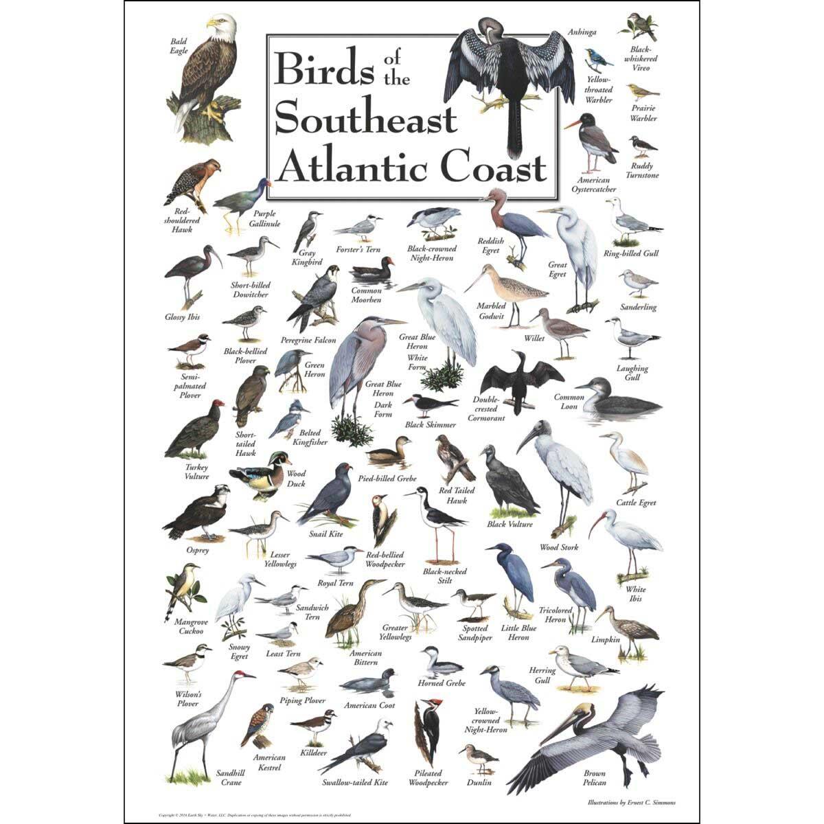 Birds of the South Atlantic Coast Birds Jigsaw Puzzle