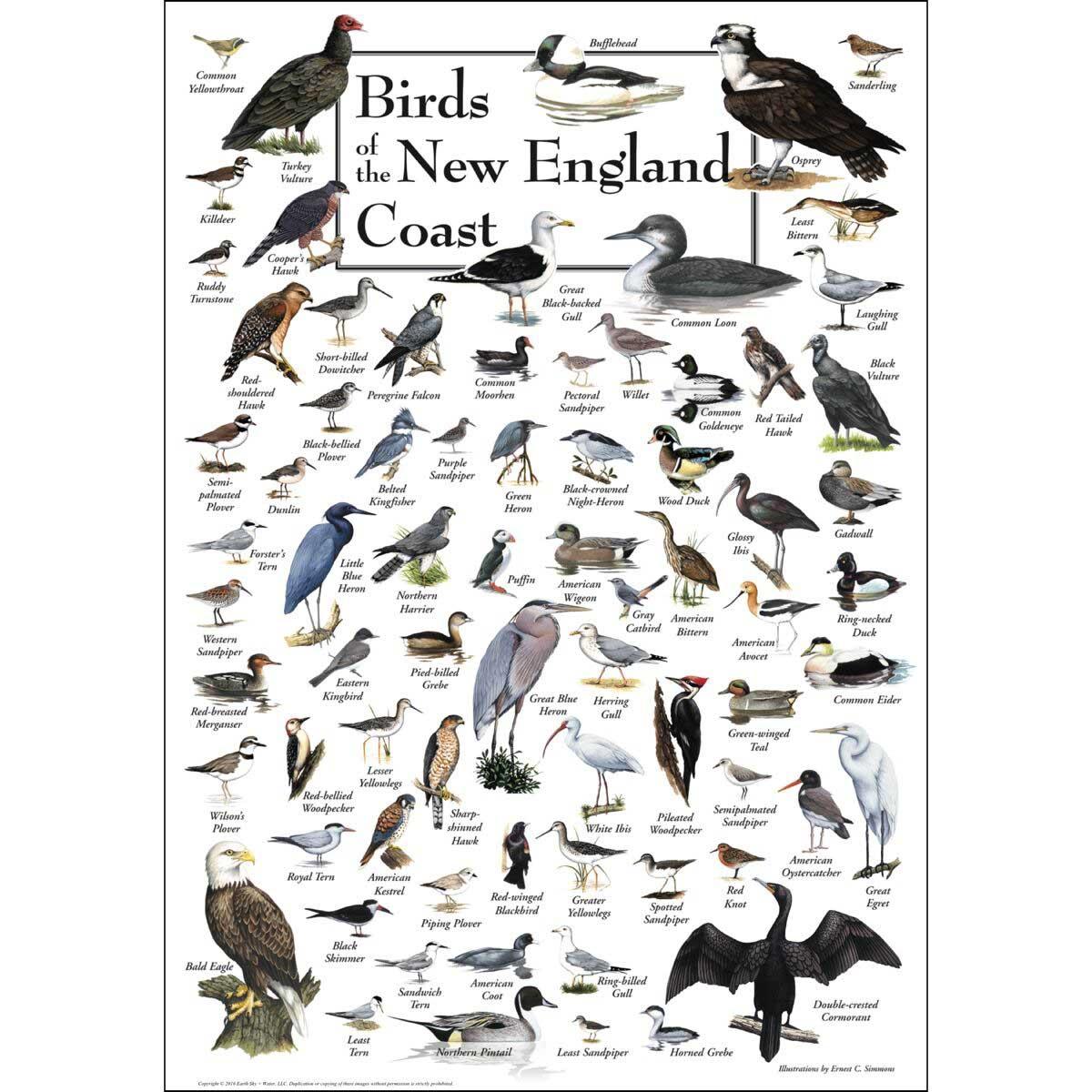 Birds of the New England Coast Birds Jigsaw Puzzle