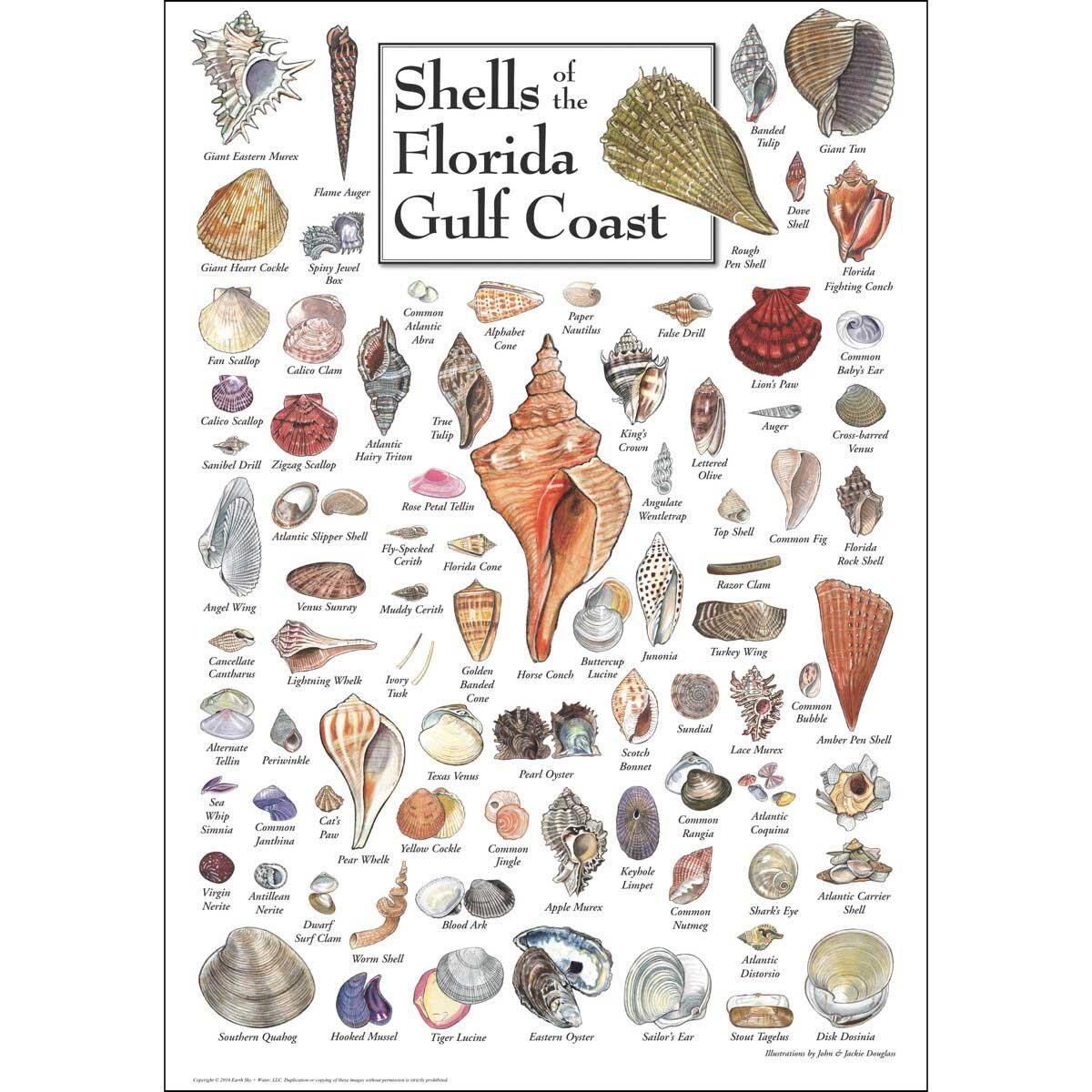 Shells of the Florida Gulf Coast Under The Sea Jigsaw Puzzle