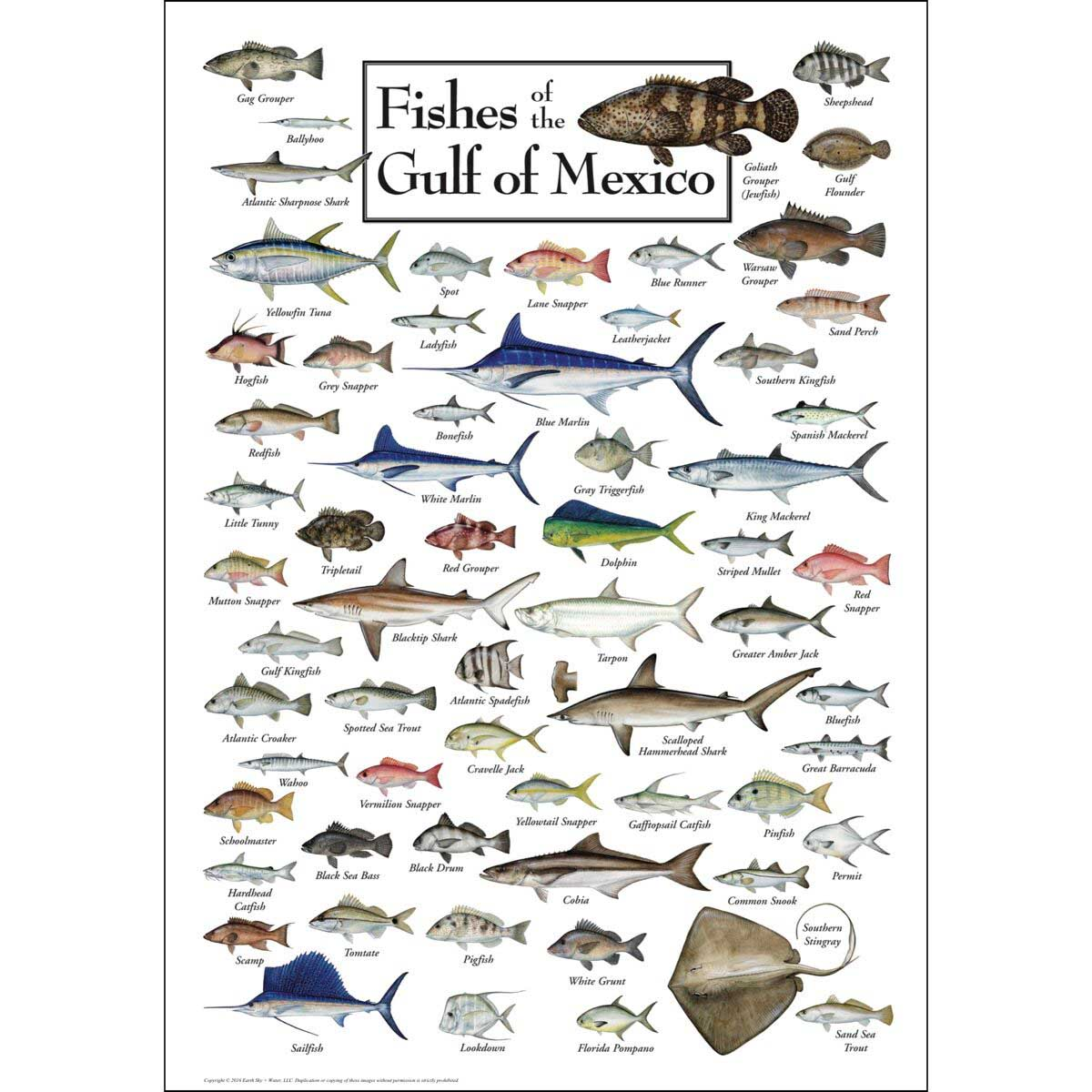 Fishes of the Gulf of Mexico Fish Jigsaw Puzzle