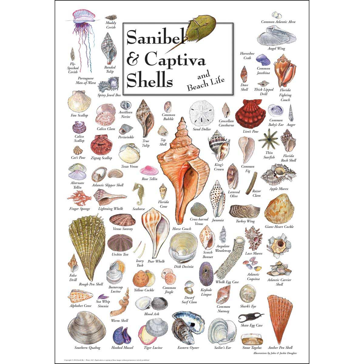 Shells of Sanibel & Captiva Under The Sea Jigsaw Puzzle