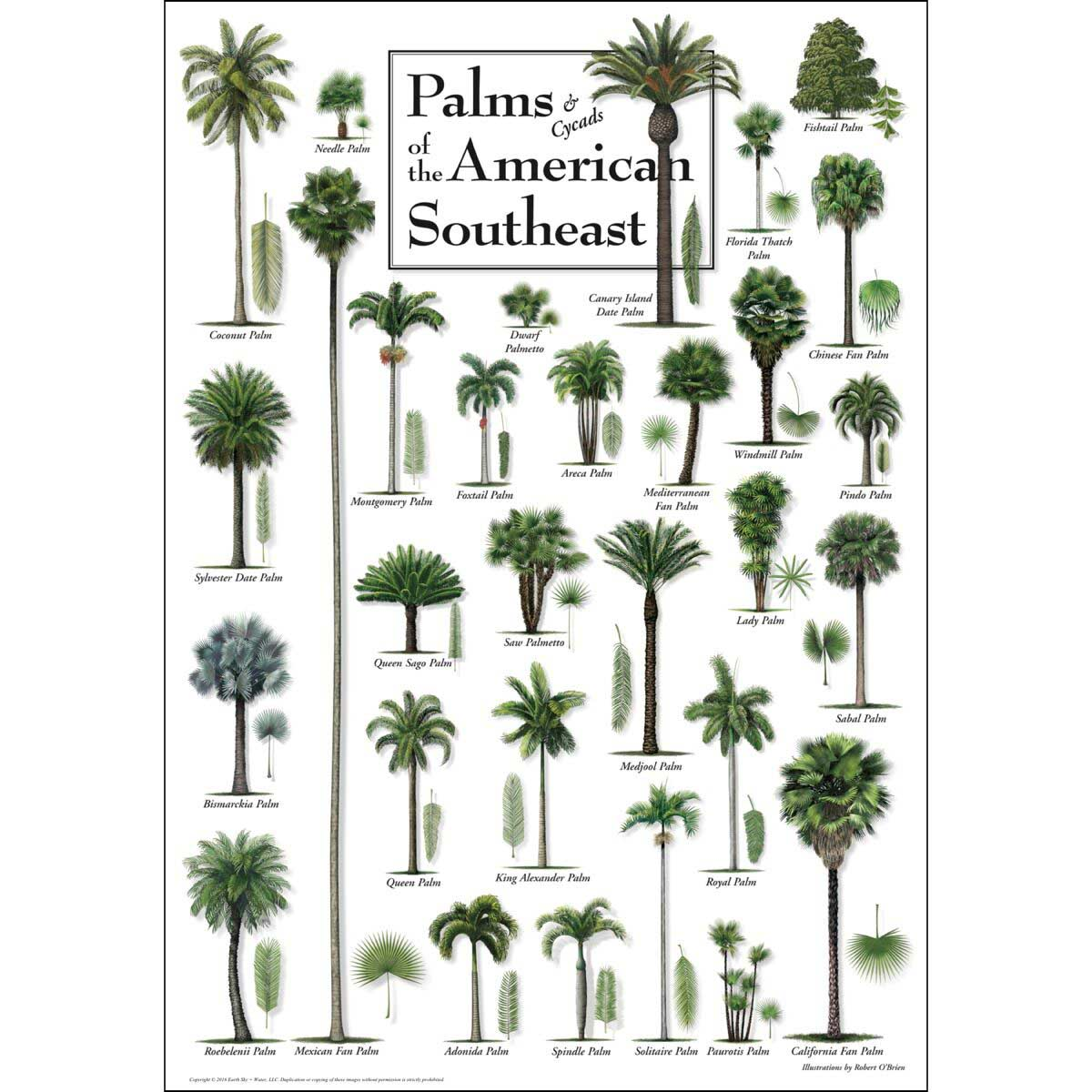 Palms of the American Southeast Jigsaw Puzzle