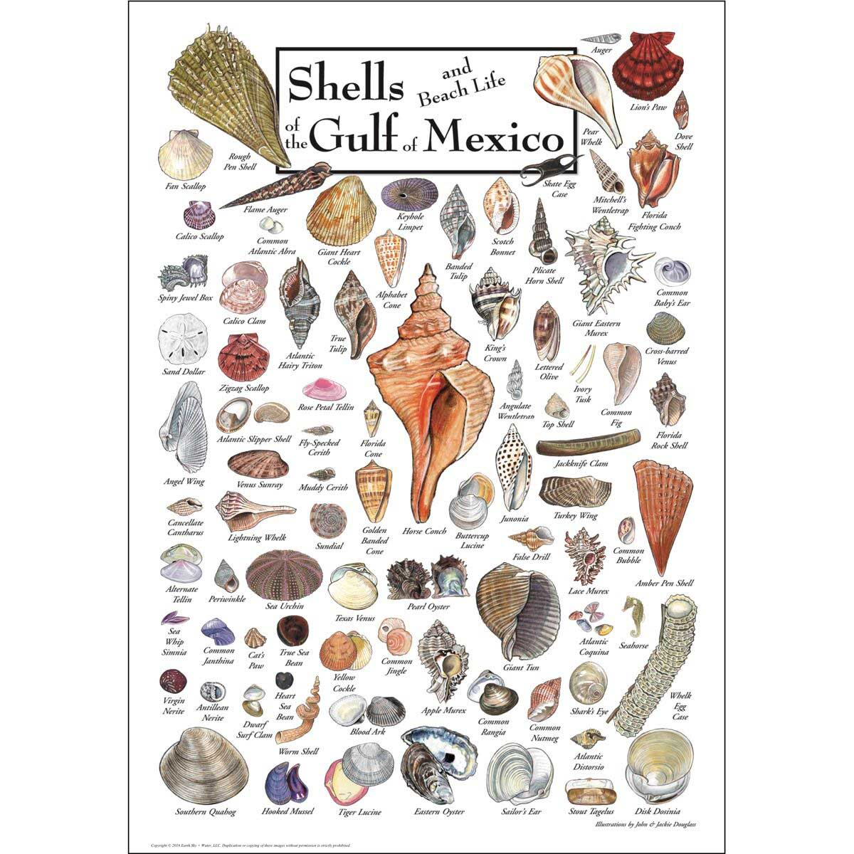 Shells of the Gulf of Mexico Under The Sea Jigsaw Puzzle