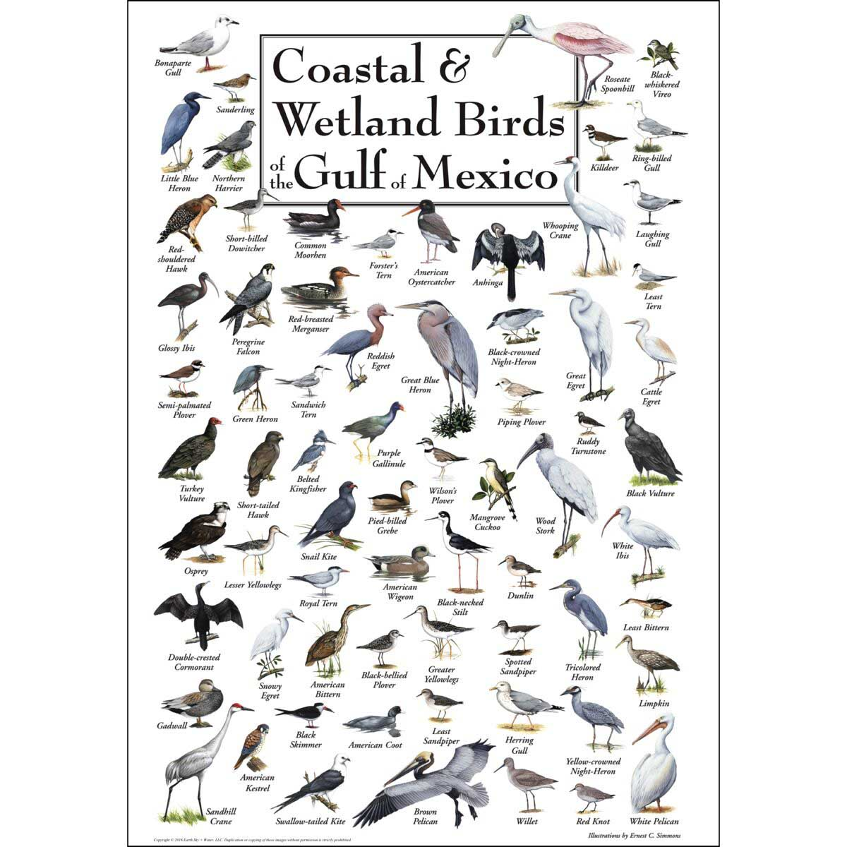 Birds of the Gulf of Mexico Birds Jigsaw Puzzle
