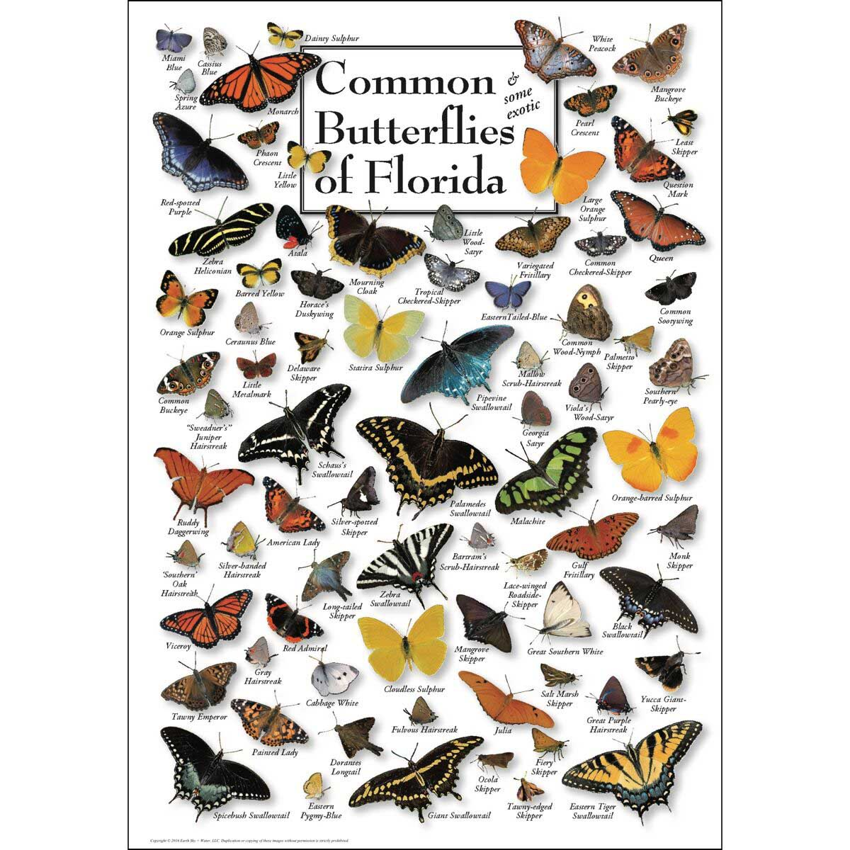 Butterflies of Florida Butterflies and Insects Jigsaw Puzzle