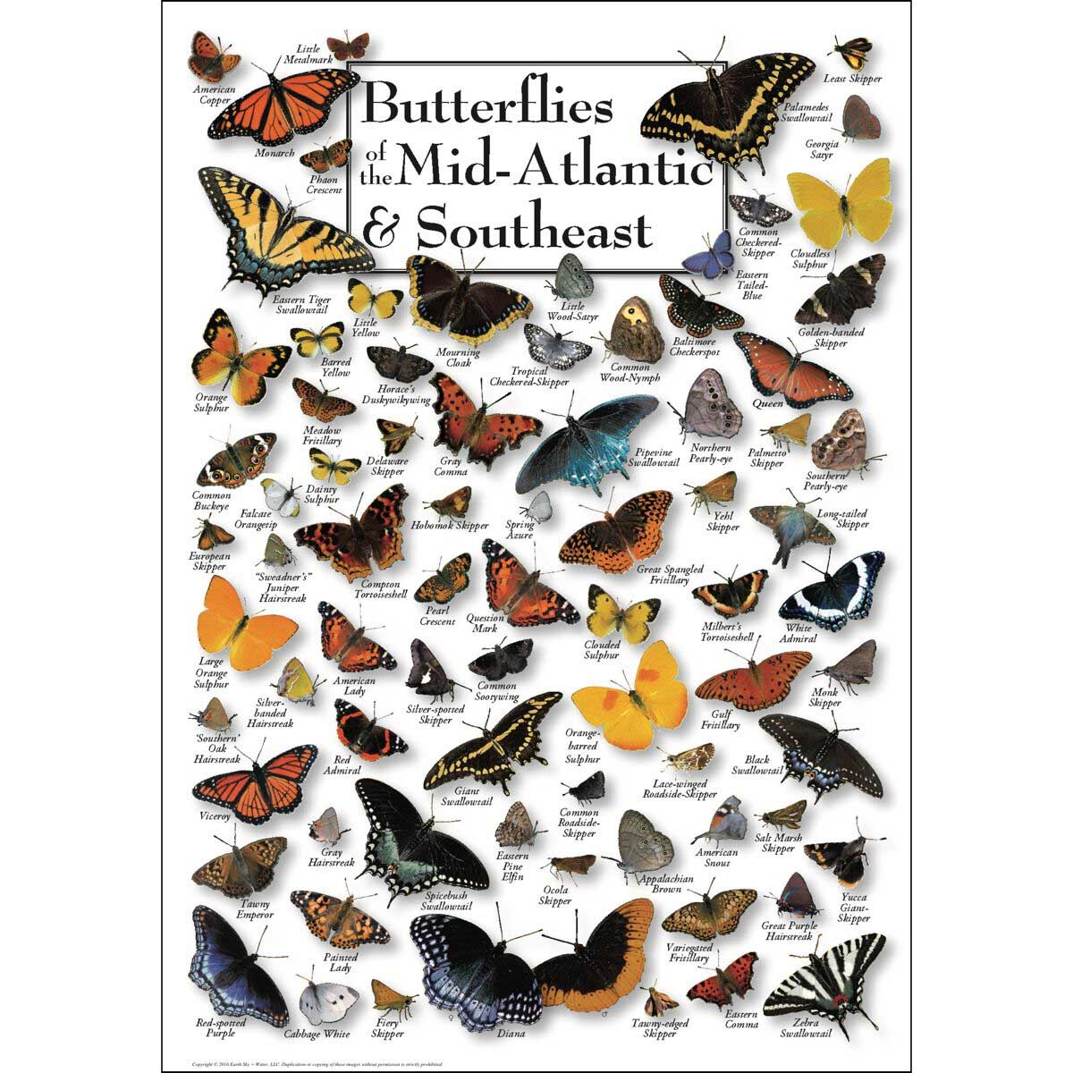 Butterflies of Mid-Atlantic & the Southeast Butterflies and Insects Jigsaw Puzzle