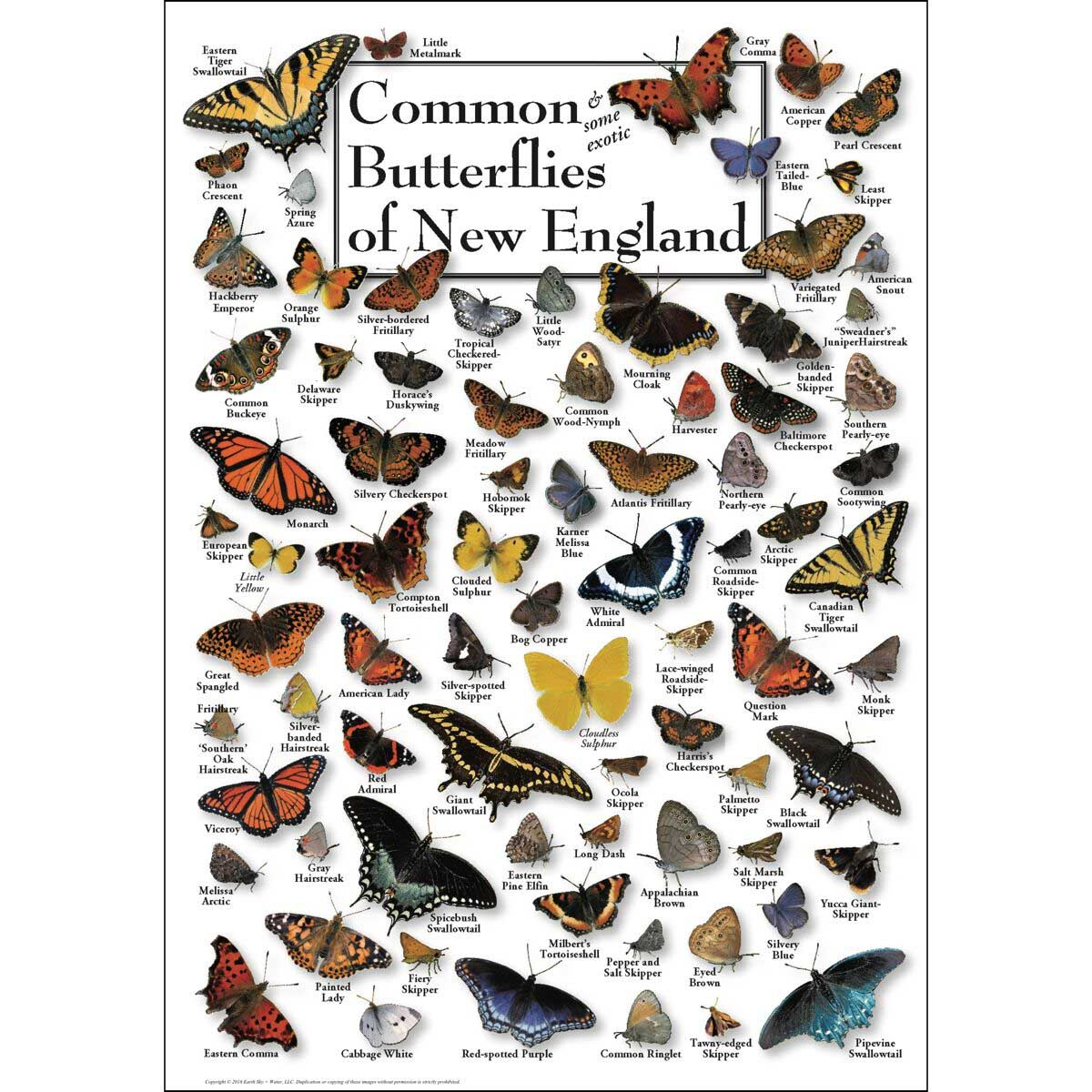 Butterlfies of New England Butterflies and Insects Jigsaw Puzzle