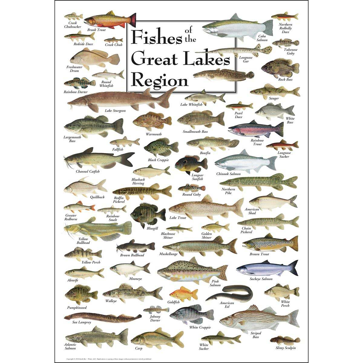 Fish of the Great Lakes Fish Jigsaw Puzzle