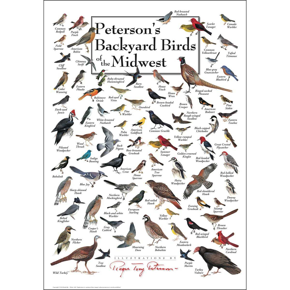 Peterson's Backyard Birds of the Midwest Birds Jigsaw Puzzle