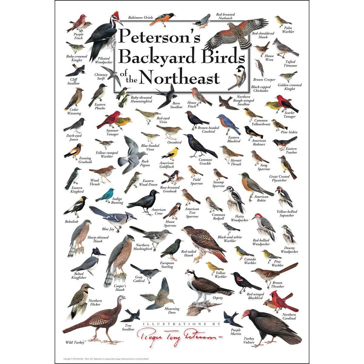 Peterson's Backyard Birds of the Northeast Birds Jigsaw Puzzle