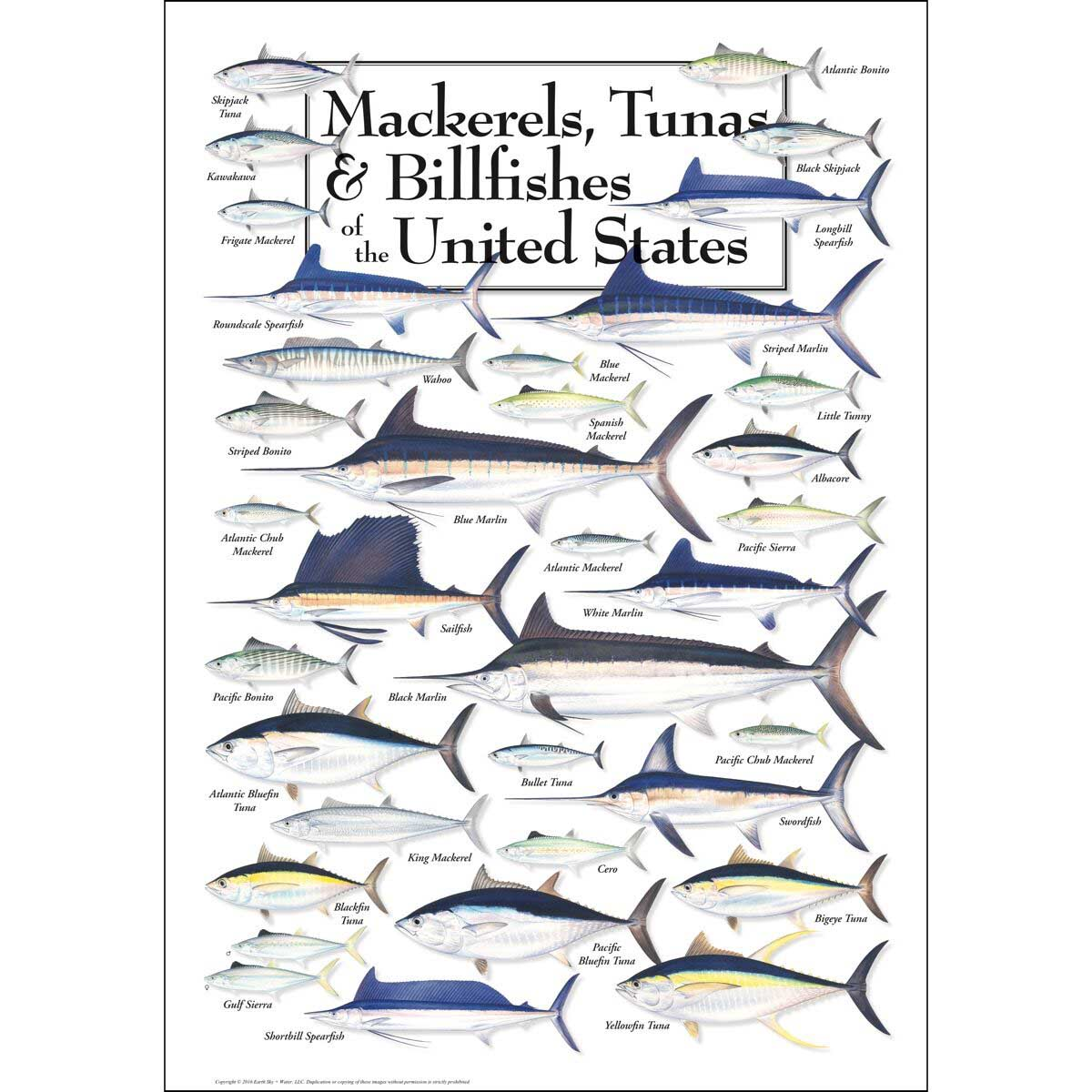 Mackerels, Tunas & Billfishes of the US Under The Sea Jigsaw Puzzle