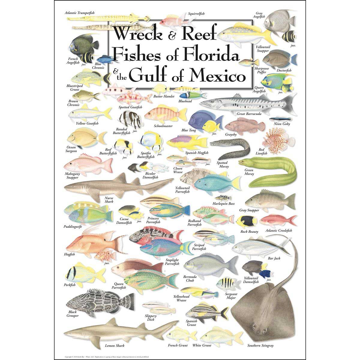 Wreck & Reef Fish of Florida & the Gulf of Mexico Under The Sea Jigsaw Puzzle