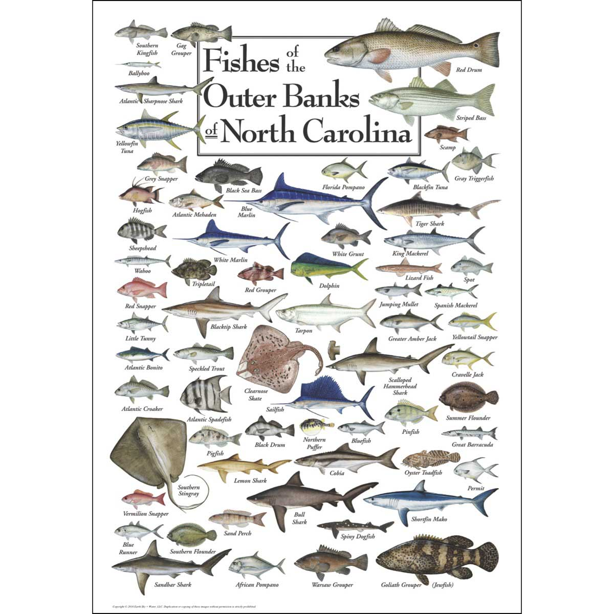 Fishes of the Outer Banks Fish Jigsaw Puzzle