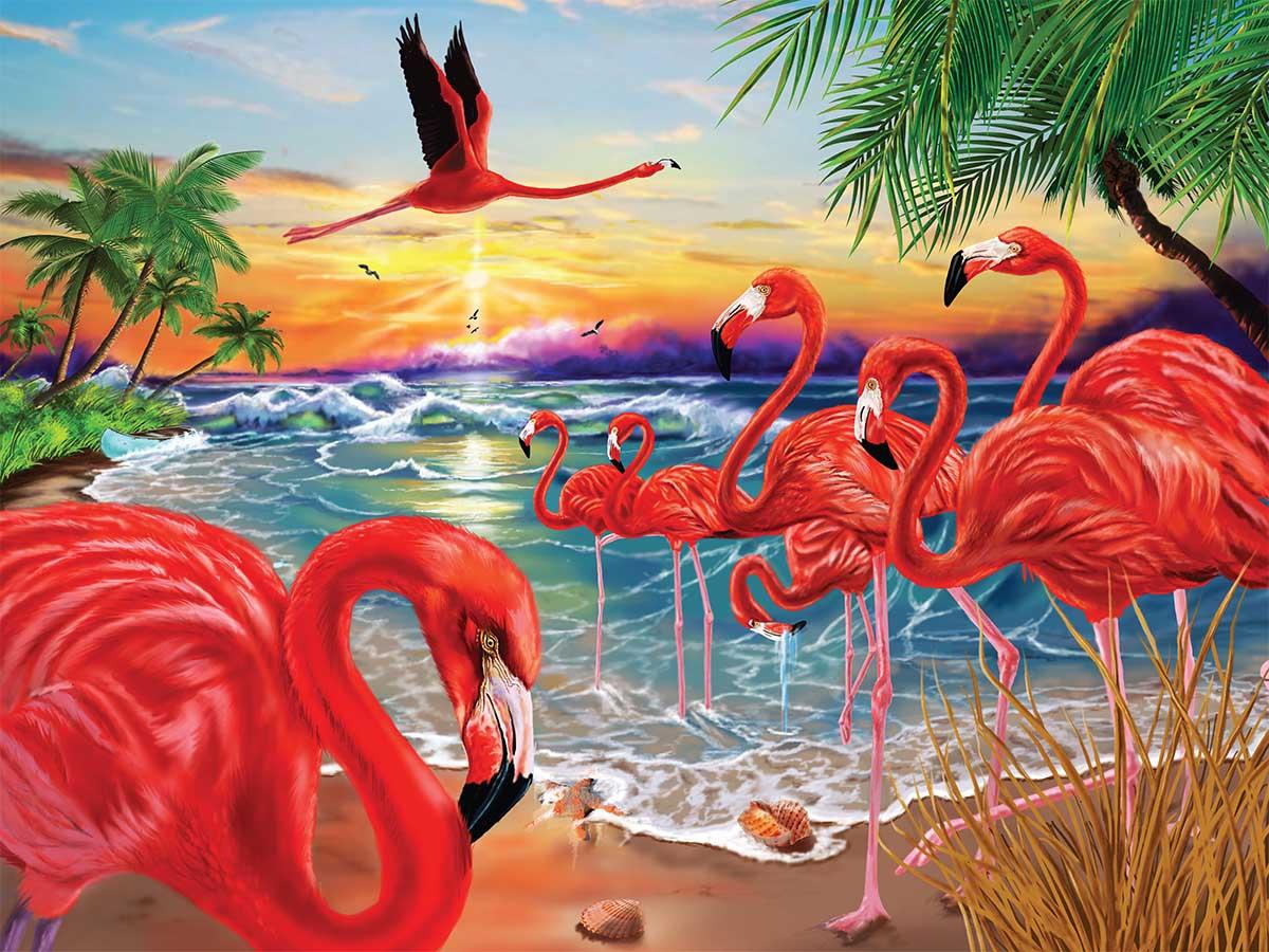 Flamingo Bay Birds