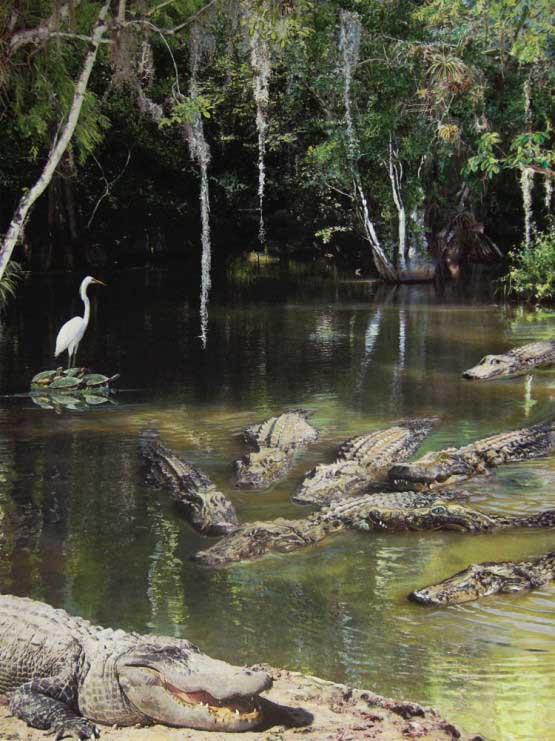 Alligator Alley Reptiles / Amphibians Jigsaw Puzzle