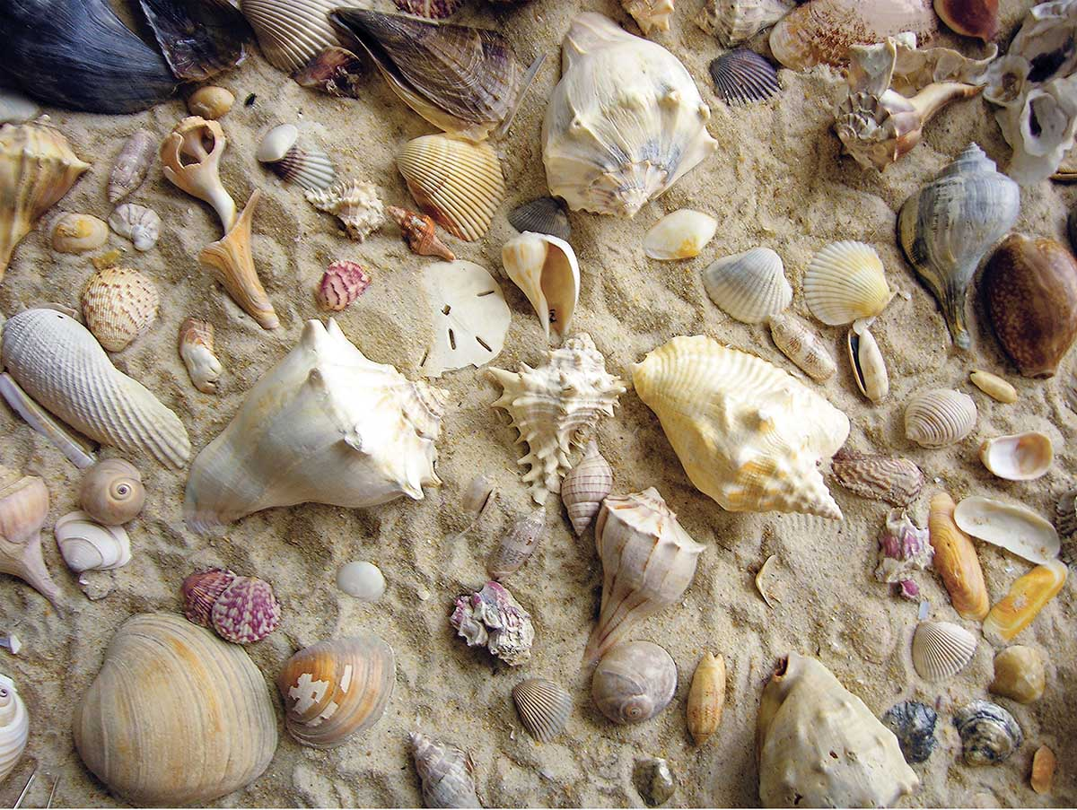She Sells Sea Shells Beach Jigsaw Puzzle