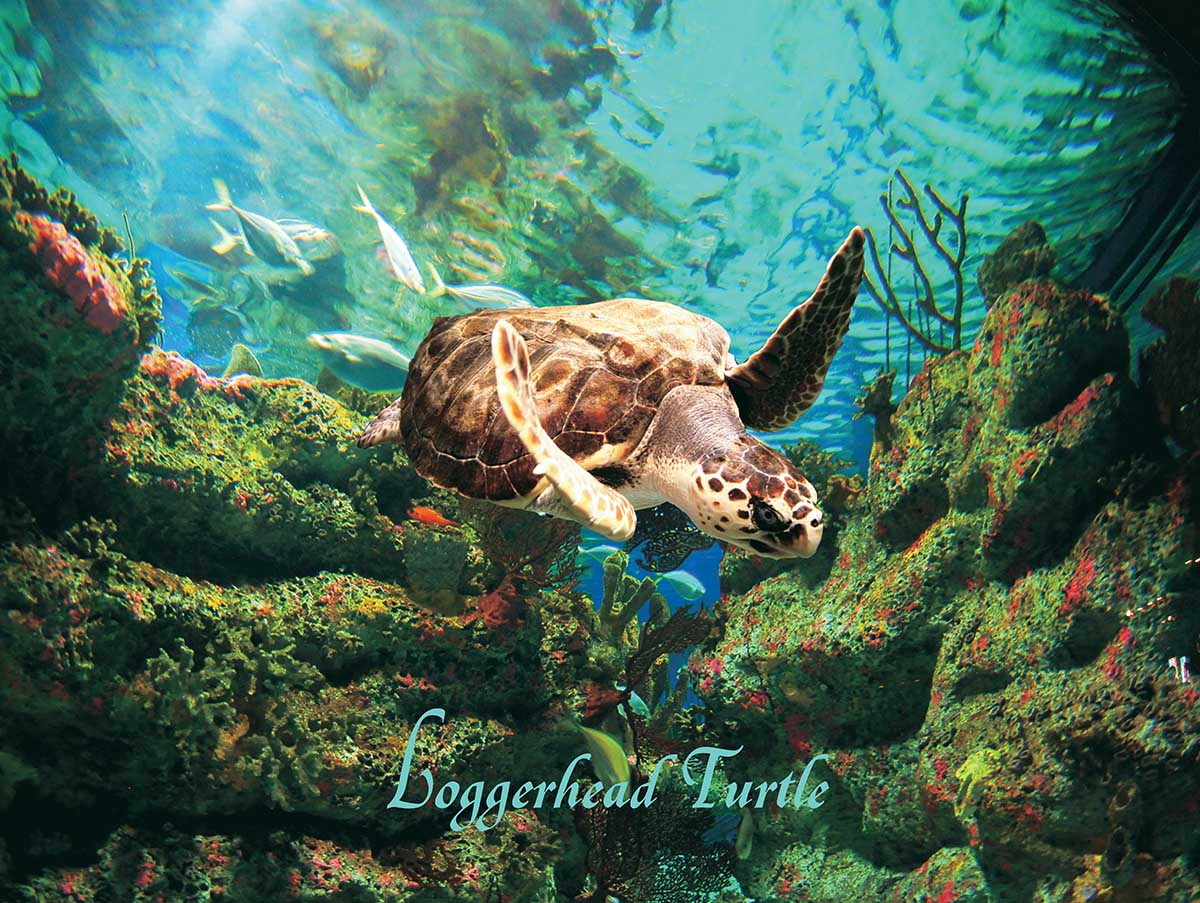 Loggerhead Turtle Under The Sea Jigsaw Puzzle