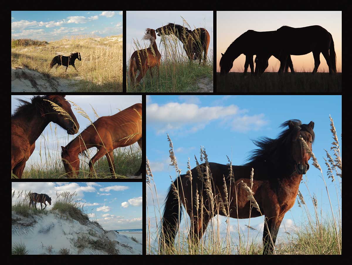 Wild Horses Beach Jigsaw Puzzle