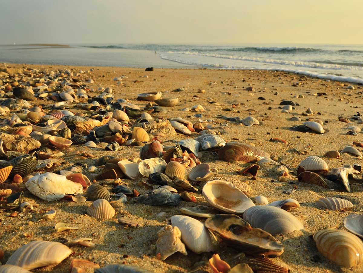 Low Tide Beach Jigsaw Puzzle