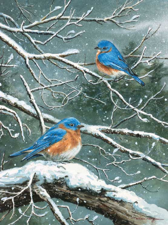 Jack & Frost - Scratch and Dent Birds Jigsaw Puzzle