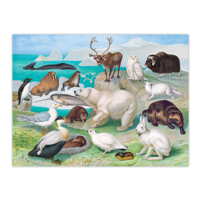 Beautiful World Arctic Animals Jigsaw Puzzle