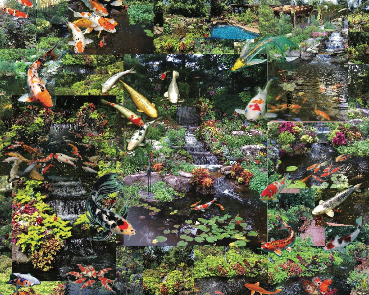 Koi, Koi, Koi Fish Jigsaw Puzzle