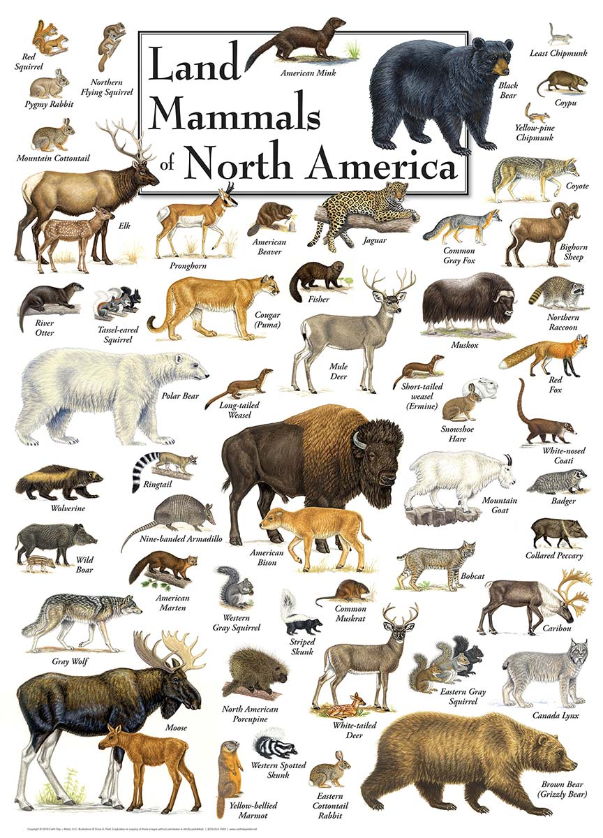 Land Mammals of North America Animals Jigsaw Puzzle