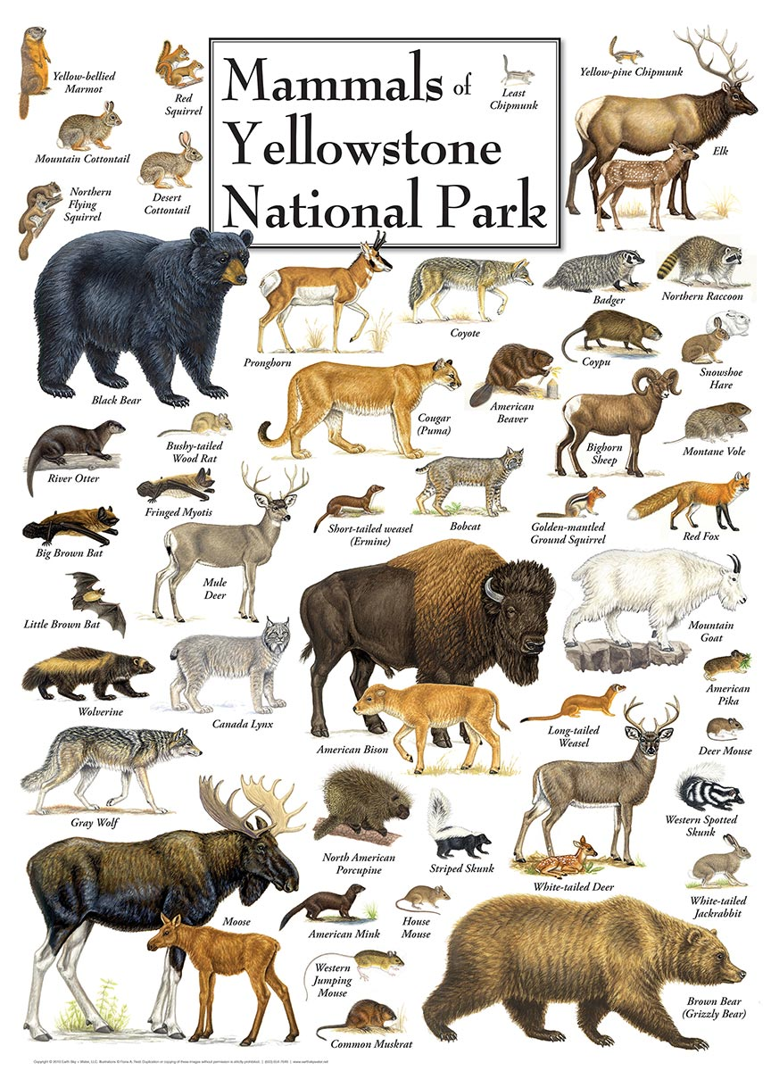 Mammals of Yellowstone National Park Wildlife Jigsaw Puzzle