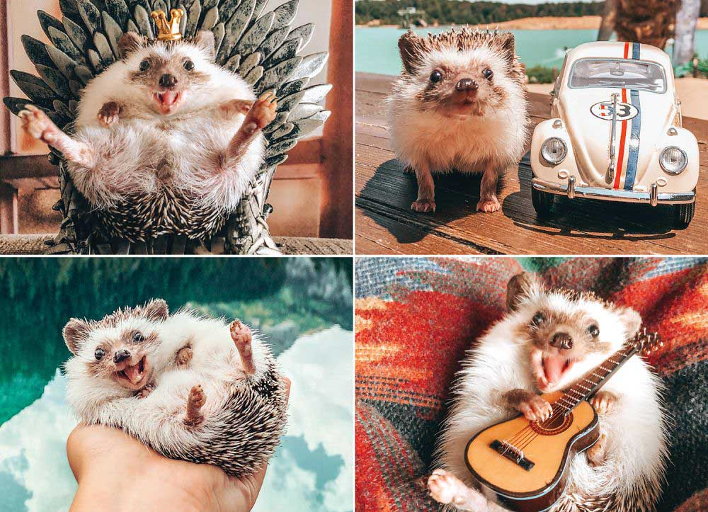 Herbee the Hedgehog Animals Jigsaw Puzzle