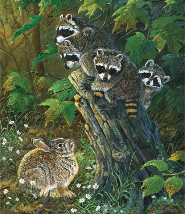 No Room at the Top Wildlife Jigsaw Puzzle