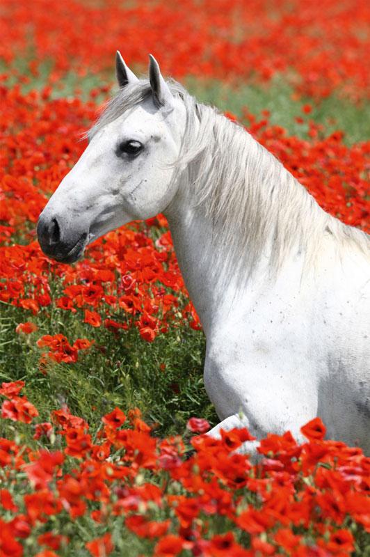 Mini Puzzles Horses - Gray Mare Horses Jigsaw Puzzle