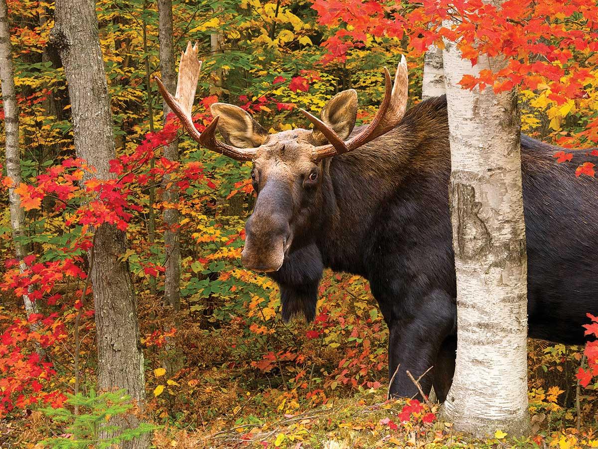 Autumn King Animals Jigsaw Puzzle