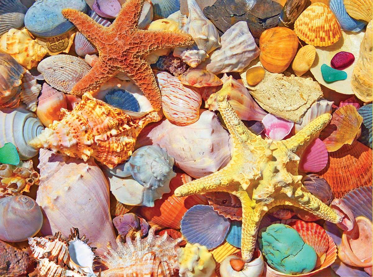 Beach Shells Under The Sea Jigsaw Puzzle