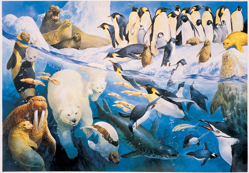 Polar Regions Animals Jigsaw Puzzle