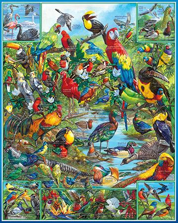 Most Beautiful Birds of the World Birds Jigsaw Puzzle