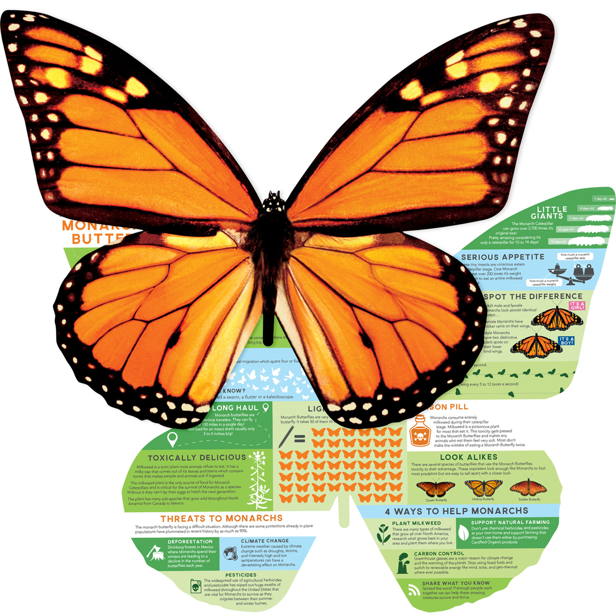 Monarch Info Butterflies and Insects Jigsaw Puzzle