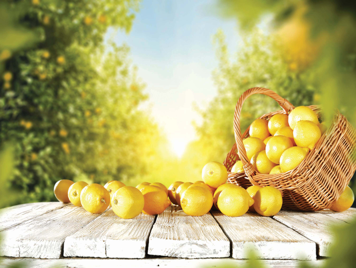 Lemon Food and Drink Jigsaw Puzzle
