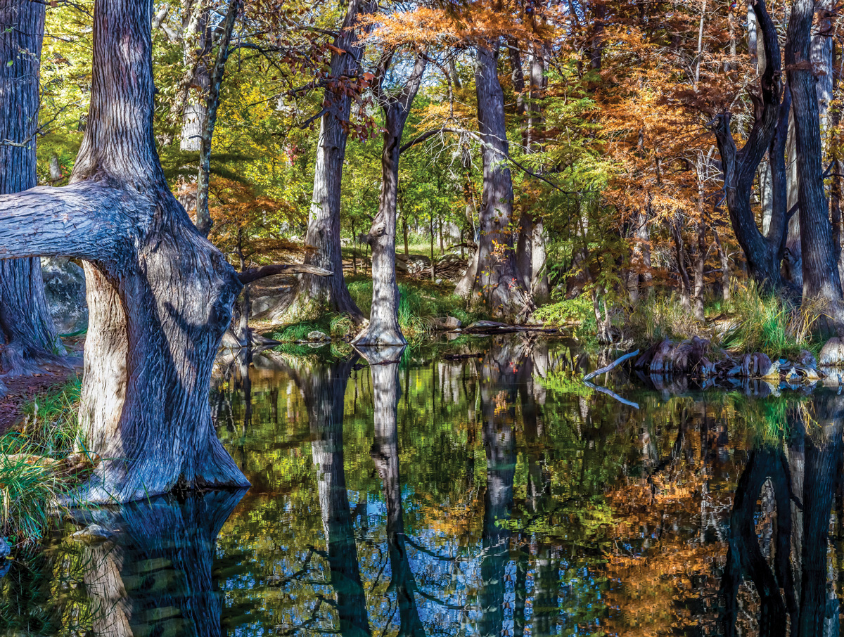 Forest River Wildlife Jigsaw Puzzle