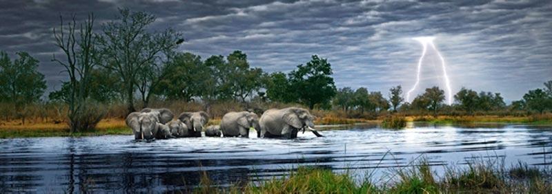 Herd of Elephants Jungle Animals Jigsaw Puzzle